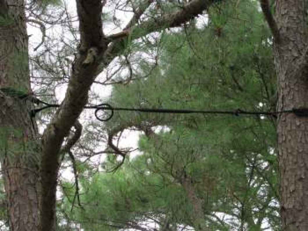 Safely Cable Your Trees in La Vergne, TN
